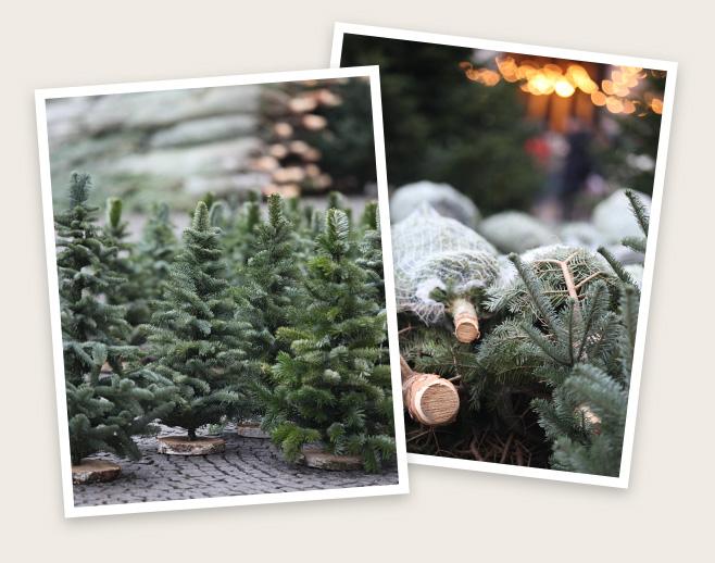 Weihnachtsbaum Kaufen Karlsruhe.Weihnachtsbaum Kaufen In Karlsruhe Christbaum Center