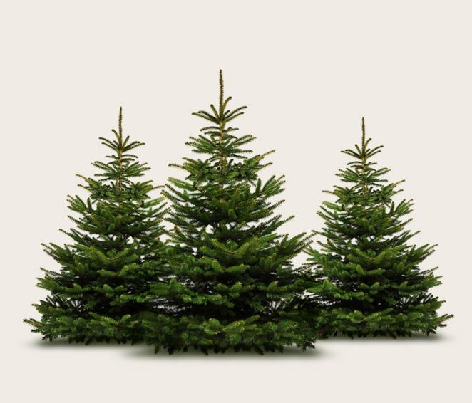Weihnachtsbaume kaufen karlsruhe